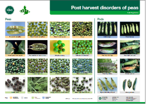 Post harvest disorders of peas